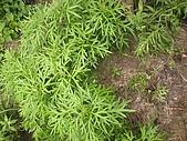 香草姐的快樂花園(過去式):2010062202.jpg