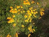 香草姐的快樂花園(過去式):2010031901.jpg