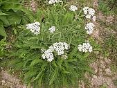 香草姐的快樂花園(過去式):2010041202.jpg
