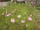 香草姐的快樂花園(過去式):2010030805.jpg
