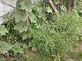 香草姐的快樂花園(過去式):2010041203.jpg