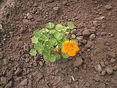 香草姐的快樂花園(過去式):2009121603.jpg