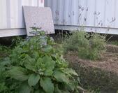 香草姐的快樂花園(過去式):2010022402.jpg