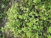 香草姐的快樂花園(過去式):東區花園2010081801.JPG