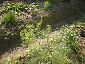 香草姐的快樂花園(過去式):2010022403.jpg