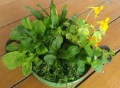 香草姐的快樂花園(現在式):沙拉盆栽ss.jpg