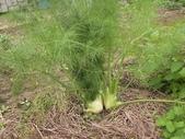 香草姐的快樂花園(過去式):2010021806.jpg