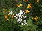 香草姐的快樂花園(過去式):2010042605.jpg