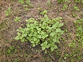 香草姐的快樂花園(過去式):2010121401.jpg
