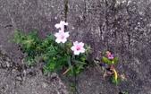 香草姐的快樂花園(現在式):最近真的忙累