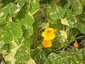 香草姐的快樂花園(過去式):2010020902.jpg