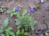 香草姐的快樂花園(過去式):2010021801.jpg