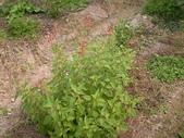 香草姐的快樂花園(過去式):2010030802.jpg