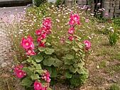 香草姐的快樂花園(過去式):2010042602.jpg