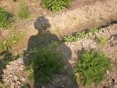 香草姐的快樂花園(過去式):20100301me.jpg
