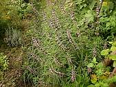 香草姐的快樂花園(過去式):2010042603.jpg