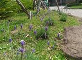 香草姐的快樂花園(現在式):每週末日過來藍陽花園