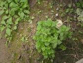 香草姐的快樂花園(過去式):2010020903.jpg