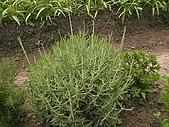 香草姐的快樂花園(過去式):2010042604.jpg