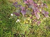 香草姐的快樂花園(過去式):2010091502.jpg