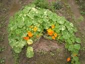 香草姐的快樂花園(過去式):2010021803.jpg