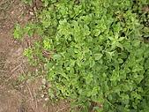 香草姐的快樂花園(過去式):2010052804.jpg