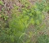 香草姐的快樂花園(過去式):2010021805.jpg