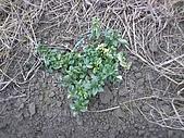 香草姐的快樂花園(過去式):2009123101.jpg