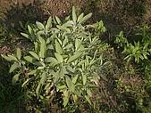 香草姐的快樂花園(過去式):2010052803.jpg