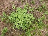 香草姐的快樂花園(過去式):2011011003.JPG