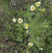 香草姐的快樂花園(過去式):2010051004.jpg