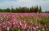 香草姐的快樂花園(現在式):元月份雖然有31天