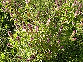 香草姐的快樂花園(過去式):2010080202.jpg