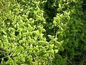 香草姐的快樂花園(過去式):2010063002.jpg
