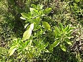 香草姐的快樂花園(過去式):2010080203.jpg