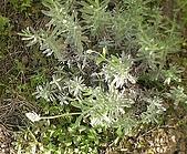 香草姐的快樂花園(過去式):2010051003.jpg