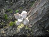 香草姐的快樂花園(現在式):這株超迷你
