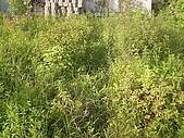 香草姐的快樂花園(過去式):2010063001.jpg