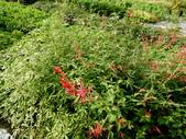 香草姐的快樂花園(現在式):喜歡看到香草旺旺的樣子