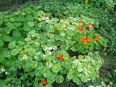香草姐的快樂花園(過去式):忙完過年,終於得空來看香草們