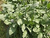 香草姐的快樂花園(過去式):2011030101.jpg
