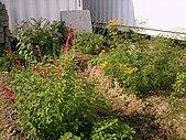 香草姐的快樂花園(過去式):2010031502.jpg