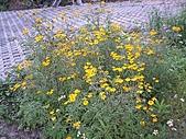 香草姐的快樂花園(過去式):2011042305