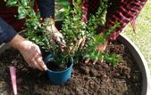 香草姐的快樂花園(現在式):這個月,又多了一個讓我掛心的花園。