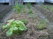 香草姐的快樂花園(過去式):2010011101.jpg