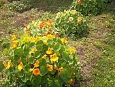 香草姐的快樂花園(過去式):2011030103.jpg