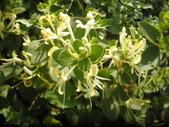 香草姐的快樂花園(現在式):夏季香草園的花神都度假去了