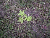 香草姐的快樂花園(過去式):2010113002.jpg