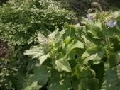 香草姐的快樂花園(過去式):2010030102.jpg