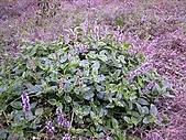 香草姐的快樂花園(過去式):2010113003.jpg